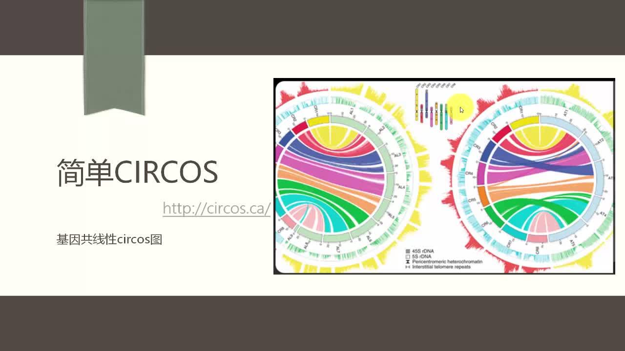 Circos-基因组共线性circos图