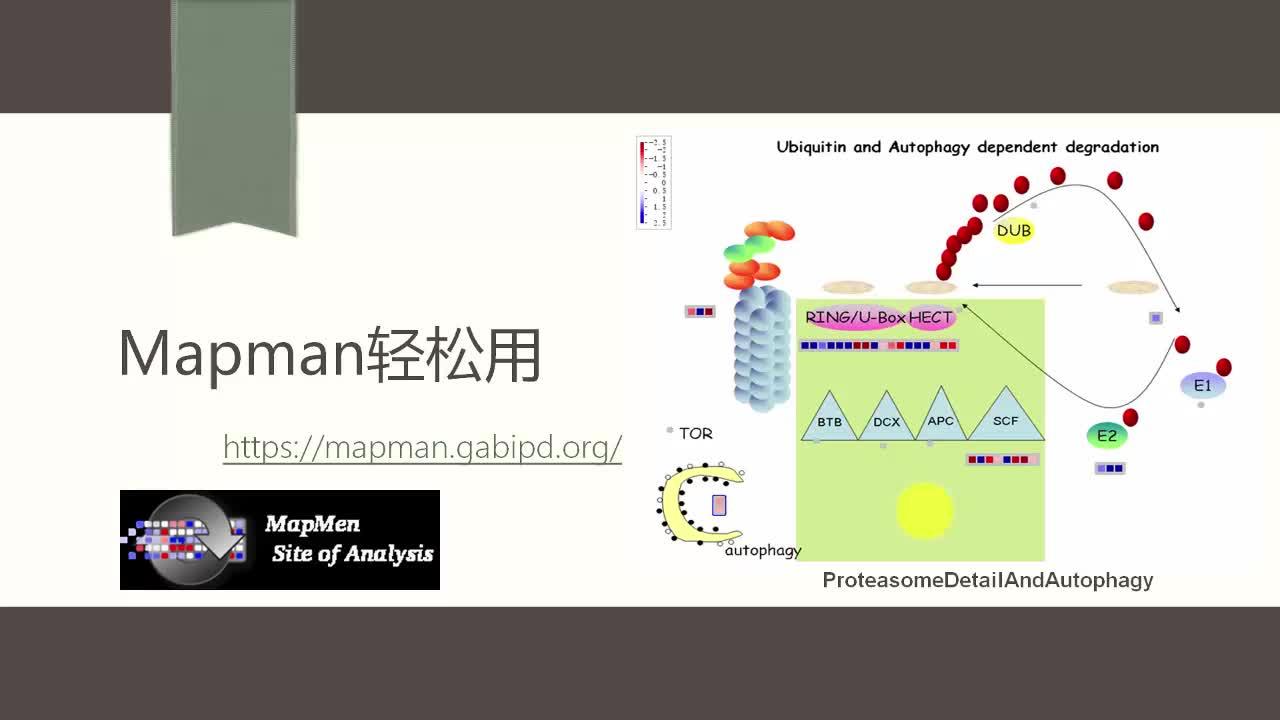 MapMan植物通路注释软件使用教程